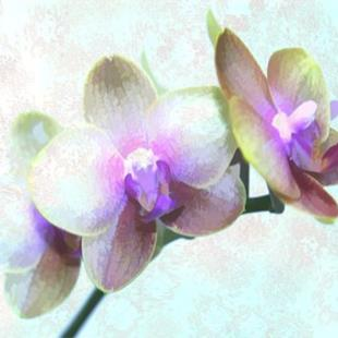 Art: Orchid Play by Artist Carolyn Schiffhouer