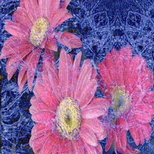 Art: Flowers in Ice by Artist Carolyn Schiffhouer