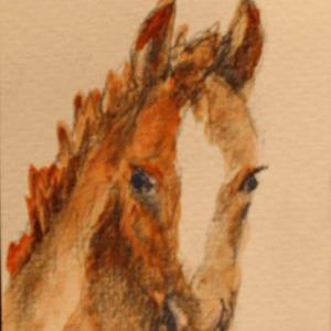 Art: Spring Foal by Artist Delilah Smith