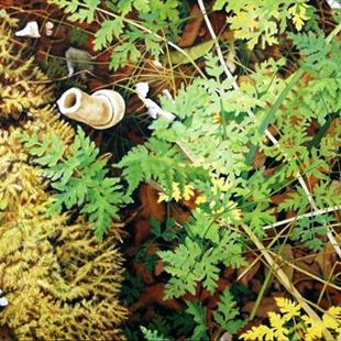 Art: Ferns with Mushroom - Oil Painting by Artist Harlan