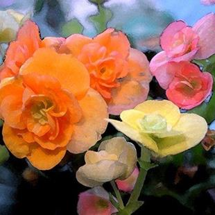 Art: Begonia Three by Artist Laurie Justus Pace