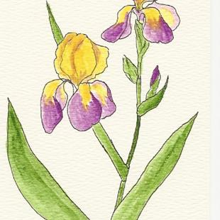 Art: Mauve and Yellow Iris OSWOA painting by Artist Nancy Denommee