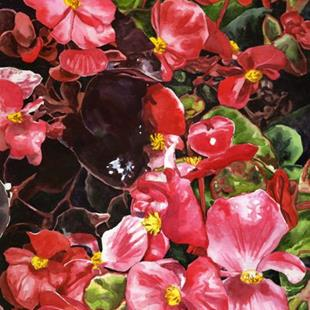 Art: Begonias by Artist Mark Satchwill