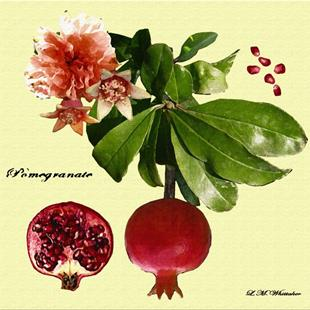 Art: Pomegranate by Artist Lisa Thornton Whittaker