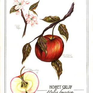 Art: Botanical Apple by Artist Alma Lee