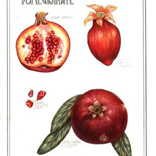 Art: Botanical Pomegranate by Artist Alma Lee