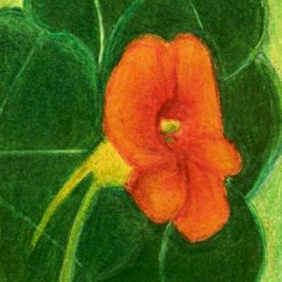 Art: NASTURTIUM SINGLE by Artist christi lynn schwartzkopf