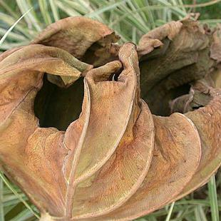 Art: Leaf Claw in Decay by Artist Ann Murray