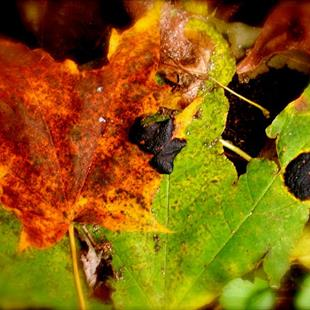 Art: Autumnal Decay - Green on Red by Artist Shawn Marie Hardy