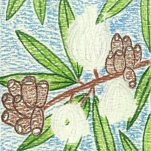 Art: ACEO - Eucalyptus Fruit & Flowers by Artist Daniel Goodwin