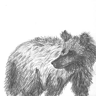 Art: Sketch of a Grizzly by Artist Gabriele M.