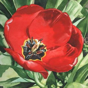 Art: Big Red Tulip by Artist Mark Satchwill