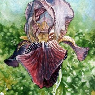 Art: Bearded Iris by Artist Mark Satchwill