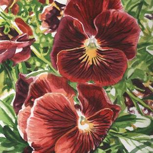 Art: Pansies by Artist Mark Satchwill