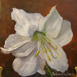 Art: White Amaryllis by Artist Barbara Haviland