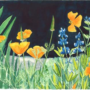Art: Poppies and Lupines by Artist Carmen Gamboa Lienkaemper