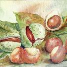 Art: Conkers (Horse Chestnuts) by Artist John Wright