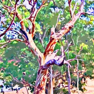 Art: River Red Gum Tree at Barossa Reservoir by Artist Joan Hall Johnston