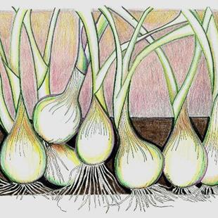 Art: Onions-A Rhythm Of Their Own by Artist Sherry Key