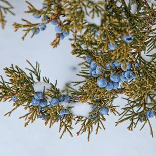 Art: Juniper Berries by Artist Lisa Miller