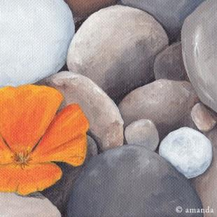 Art: Poppy and Pebbles by Artist Amanda Makepeace