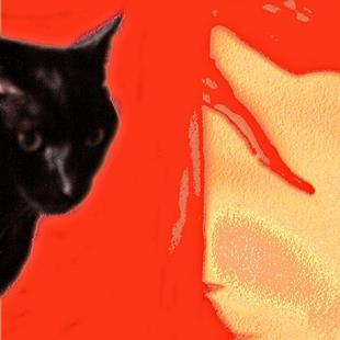 Art: Knodl's Aura     Photo of my cat with digi background by Artist Ruth Edward Anderson