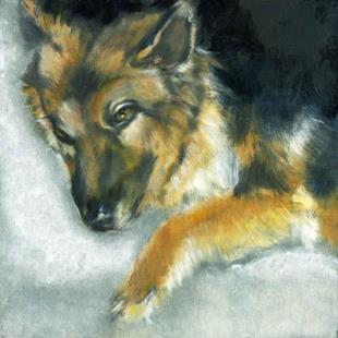 Art: Dixson a Long Haired Shepard by Artist Alma Lee