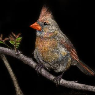 Art: Cardinal by Artist Sandra Willard
