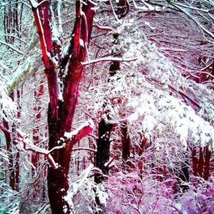 Art: Winter in Pink and Blue by Artist Carolyn Schiffhouer