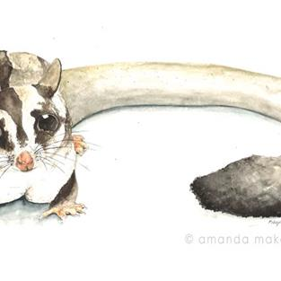 Art: Sugar Glider by Artist Amanda Makepeace