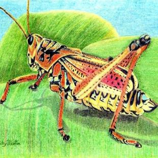 Art: Grasshopper - available in my etsy store by Artist Ulrike 'Ricky' Martin