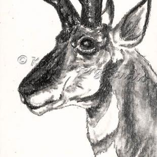 Art: Charcoal Pronghorn SOLD by Artist Kim Loberg
