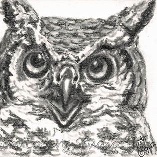 Art: Charcoal Great Horned Owl - SOLD by Artist Kim Loberg