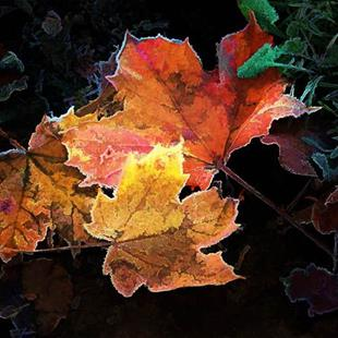 Art: Fallen Leaves in Autumn by Artist Carolyn Schiffhouer