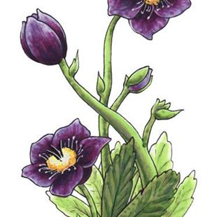 Art: Black Hellebore by Artist Erika