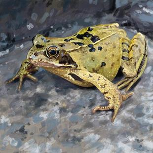 Art: Funny Little Frog by Artist Mark Satchwill