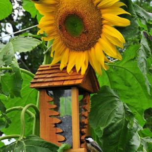 Art: Hippity Hop to the Sunflower Shop by Artist Stephanie M. Daigle