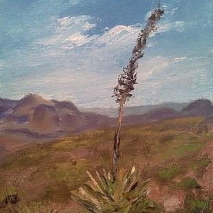 Art: Agave on South Kaibob Trail, Grand Canyon 2013 by Artist Kimberly Vanlandingham