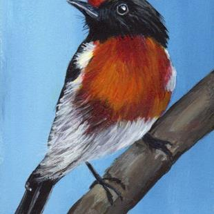 Art: Red Capped Robin ACEO by Artist Janet M Graham