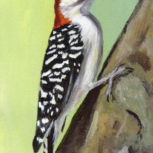 Art: Red Bellied Woodpecker ACEO by Artist Janet M Graham