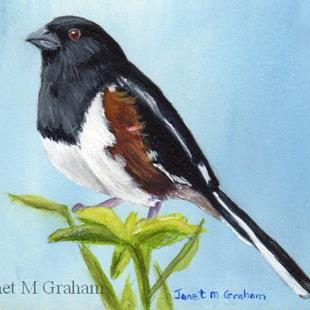 Art: Eastern Towhee ACEO by Artist Janet M Graham