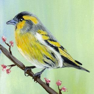 Art: Siskin ACEO by Artist Janet M Graham