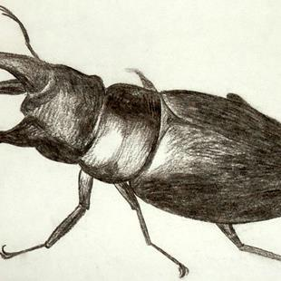 Art: beetle by Artist Jane Gould