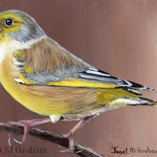 Art: Greenfinch ACEO by Artist Janet M Graham