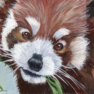 Art: Red Panda ACEO by Artist Janet M Graham