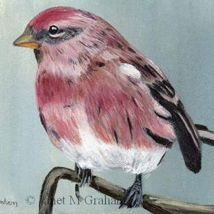 Art: Redpoll ACEO by Artist Janet M Graham