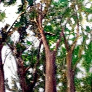 Art: trees2a by Artist Judith A Brody