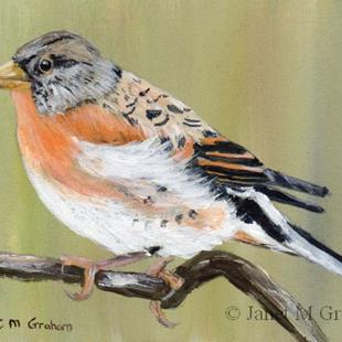 Art: Brambling ACEO by Artist Janet M Graham