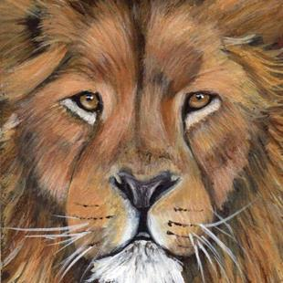 Art: Lion ACEO by Artist Janet M Graham