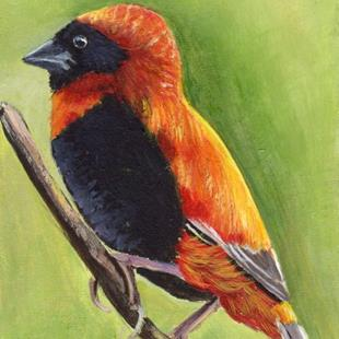 Art: Red Bishop ACEO by Artist Janet M Graham